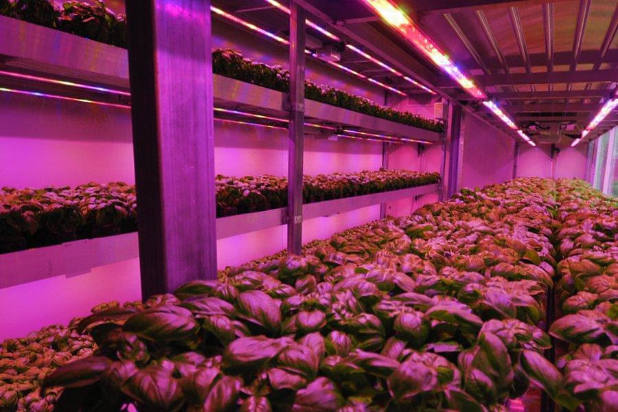 Vertical Farm | Le futur sous contrôle.